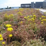 Green  Roofs in Ash Vale 4