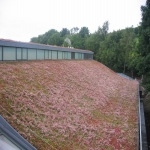 Sedum Roof Installation in Alder Forest 4