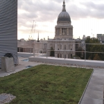 Sedum Roof Installation in Armshead 11