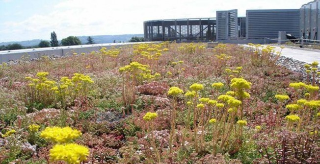 Sedum Roof Experts in Amwell