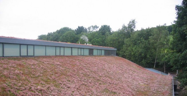 Sedum Roof Cost in Amwell